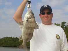 Black Drum caught on a recent (December 2006) Fins N Grins Marco Island Charter Fishing Trip